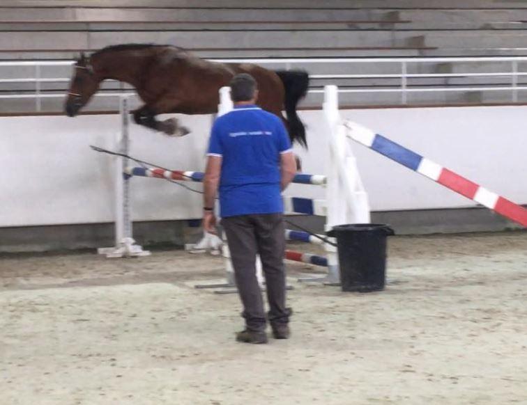Floki de Béchevel concours d`élevage Saint LO 2018 7 ème